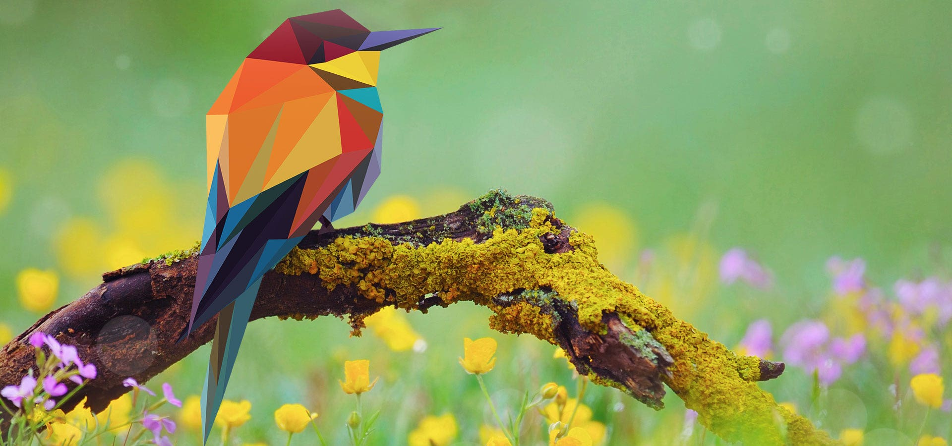 birdartd