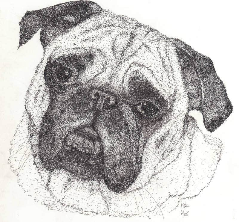 Pug in pen and Ink
