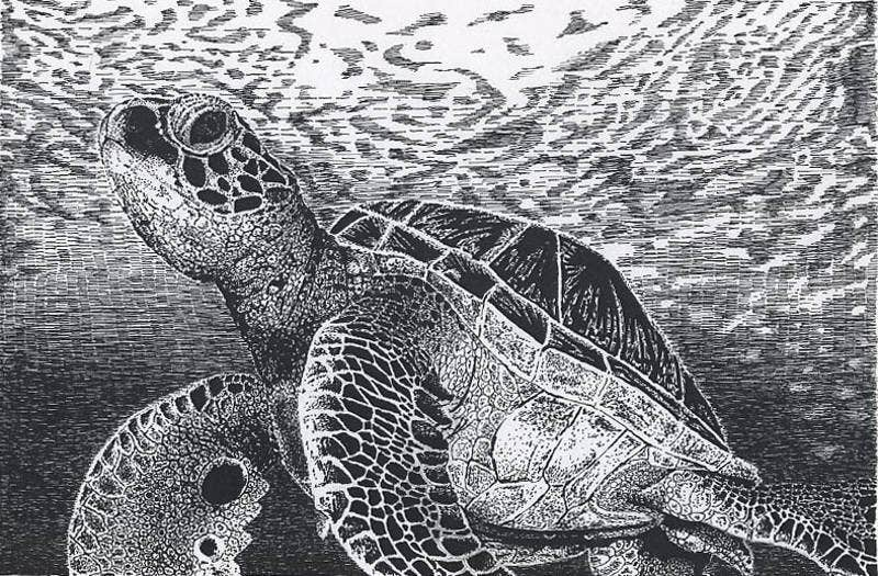 Pen Drawing of Sea Turtle