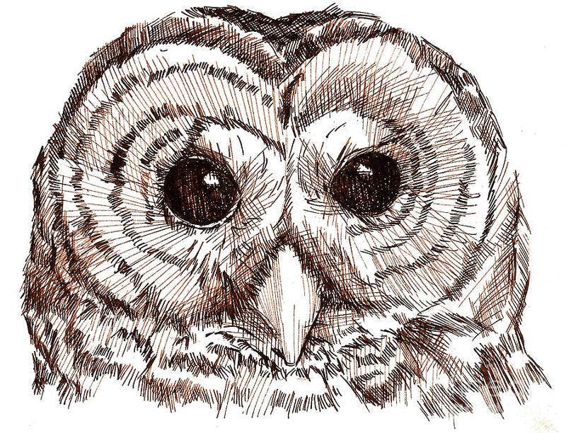 Pen And Ink Owl Drawing