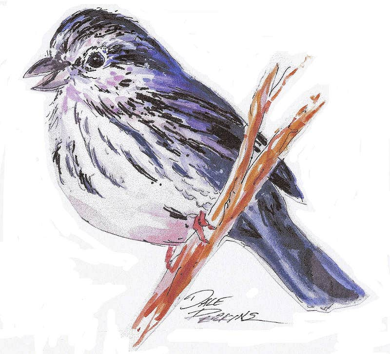 Pen and ink Drawing of a Sparrow