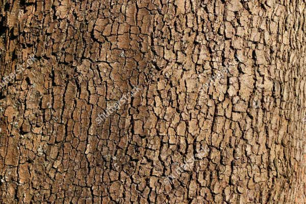 tree bark background texture
