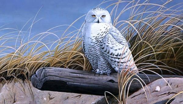 owl artworks