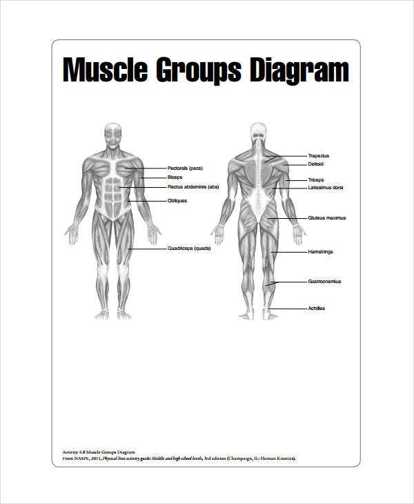 muscle chart - 7+ free pdf documents download | free & premium, Muscles