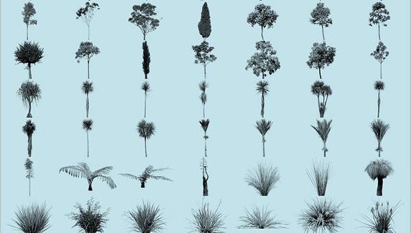 plantbrushes1