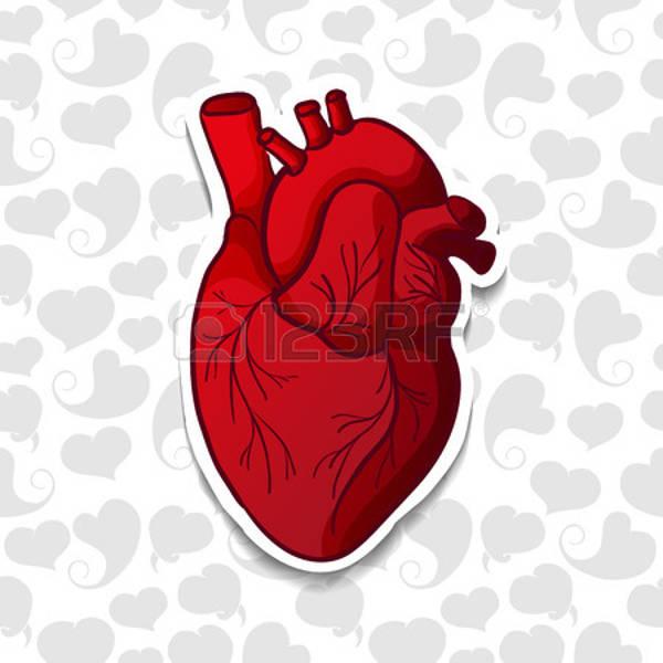 human heart silhouette