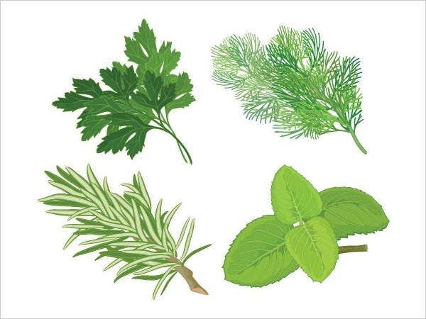 herbal leaves vector