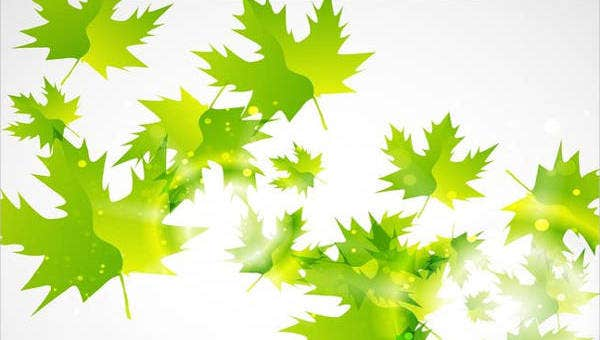leaf vector feature images