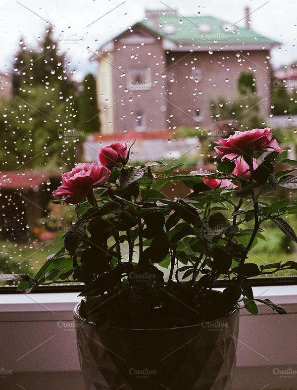 Rainy Spring Photography