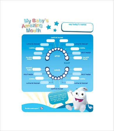 picture about Baby Teeth Chart Printable named Youngster Enamel Chart - 8+ No cost PDF Files Down load No cost