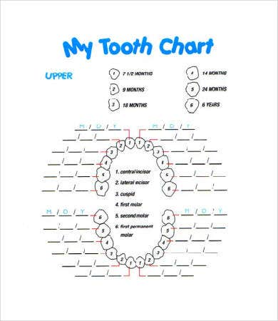 Baby Teeth Chart - 8+ Free Pdf Documents Download | Free & Premium