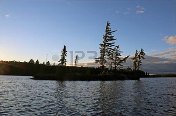 jack-pine-tree-silhouette
