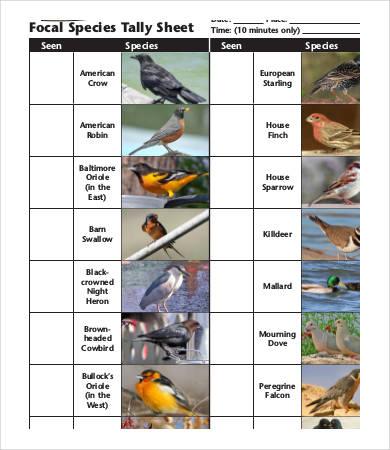 species tally sheet template