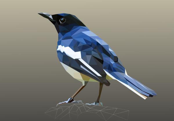 polygon bird illustration