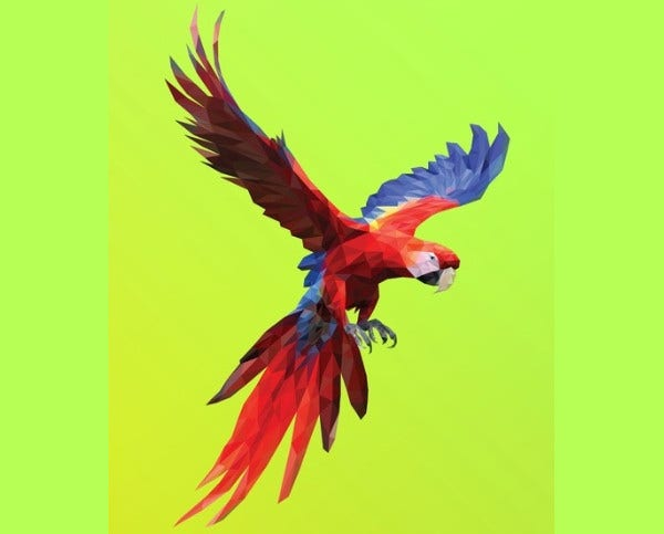 colorful parrot illustration