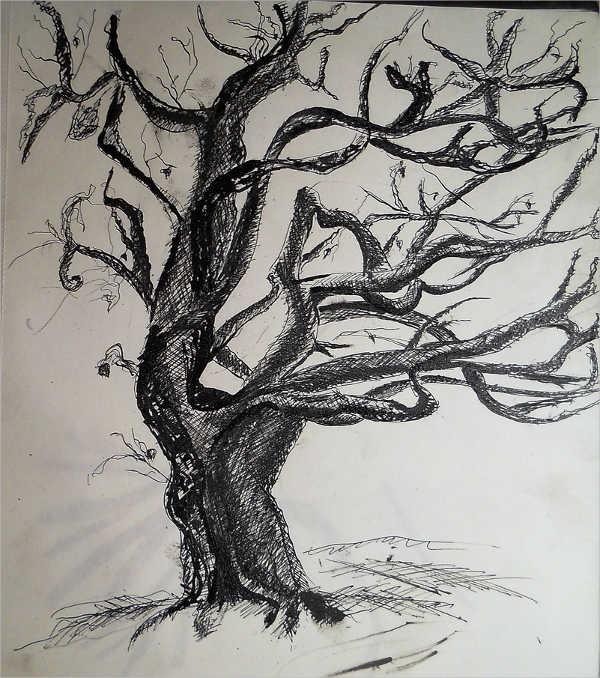 weeping-tree-drawing