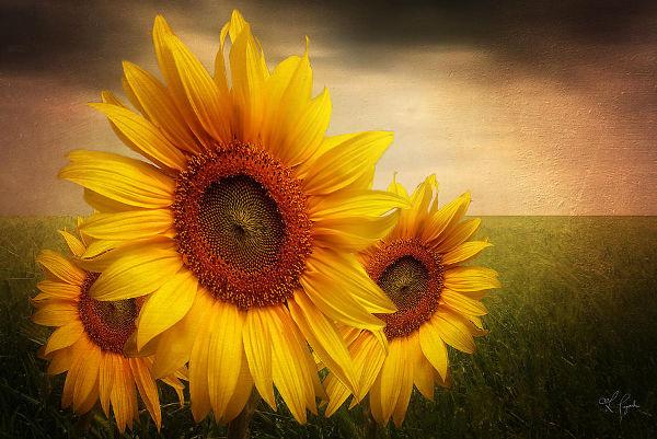 Sunflower Art by Lourry Legarde