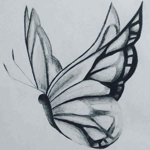 butterfly art drawing