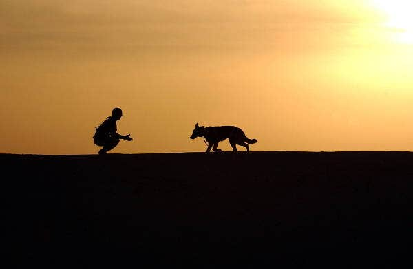 animal silhouette photography