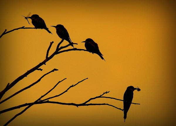 bird-silhouette-photography