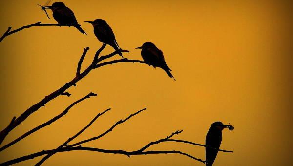 silhouettephotography