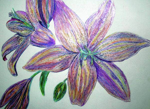 Color Flower Pencil Drawing