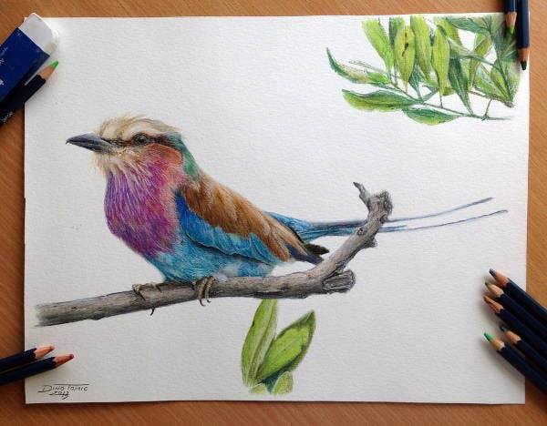 Color Bird Pencil Drawing