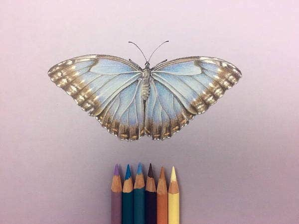 Color Butterfly Pencil Drawing