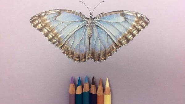 7 Color Pencil Drawings Art Ideas Free Premium Templates
