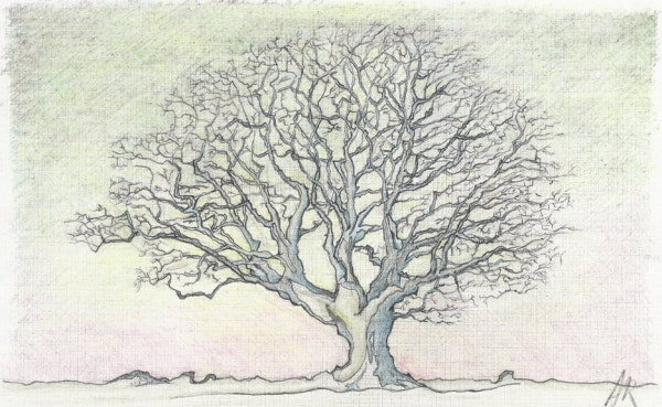 nature tree drawing