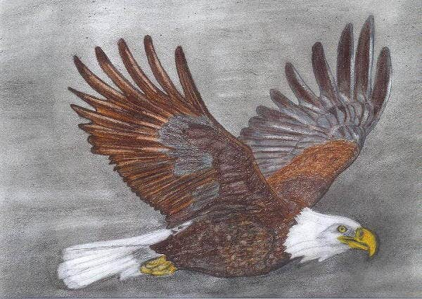 eagle wings drawing