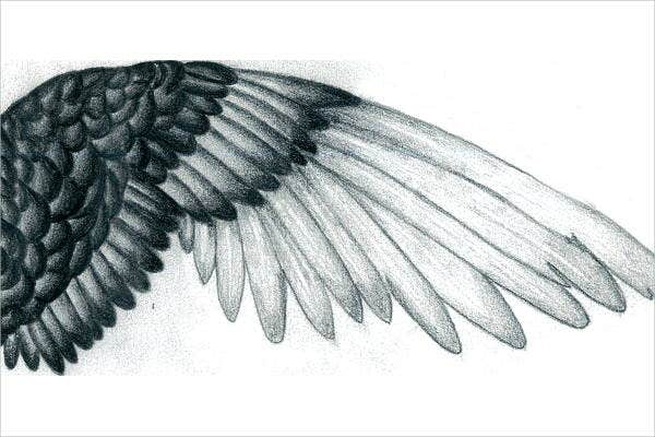 bird-wings-drawing