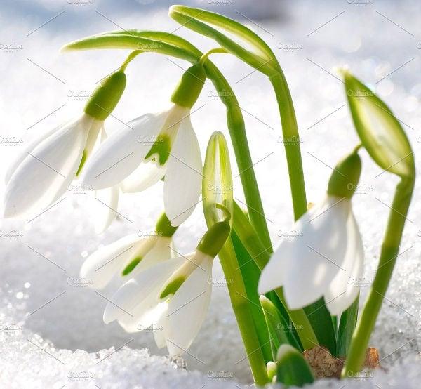 printable spring flower template
