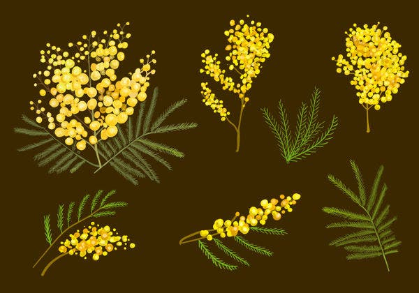Mimosa Flowers Template