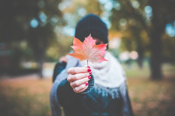 Girl Holding Autumn Colored Maple Leaf