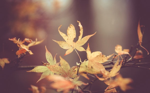 Fall Leaves Photography