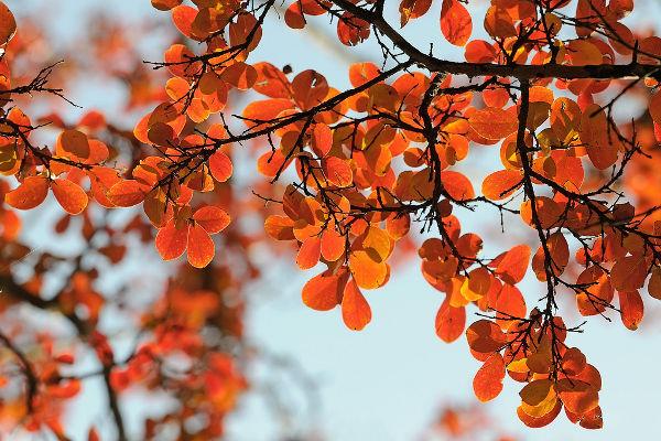 Orange Autumn Leaves Photography