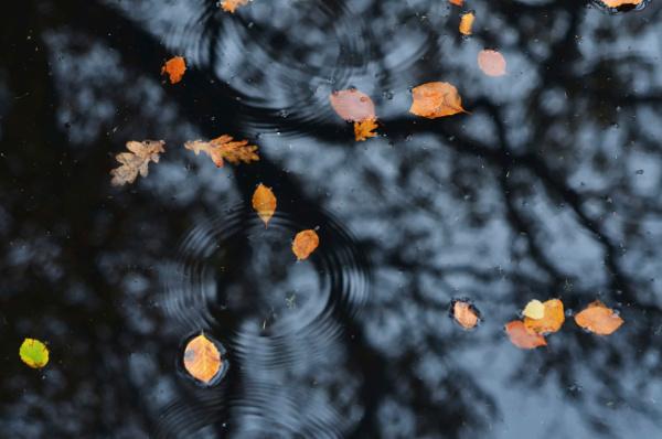 Leaves in Dark Water