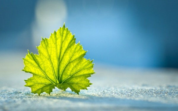 Green Leaf Photography