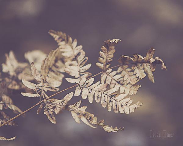 Floral Leaf Photography