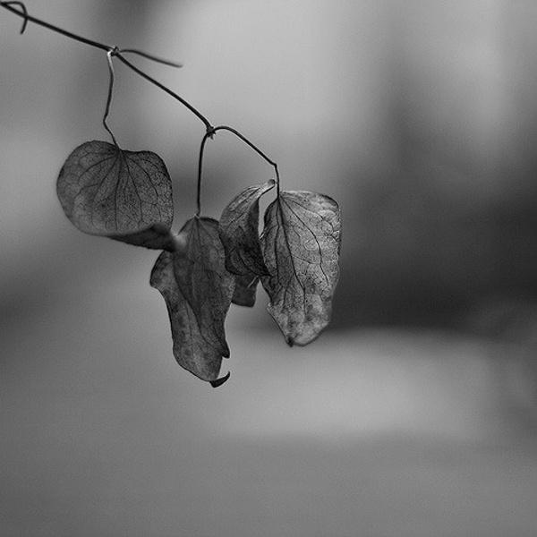 B&W Leaf Photography