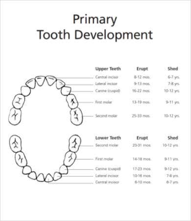 Free Printable Preschool Dental Worksheet