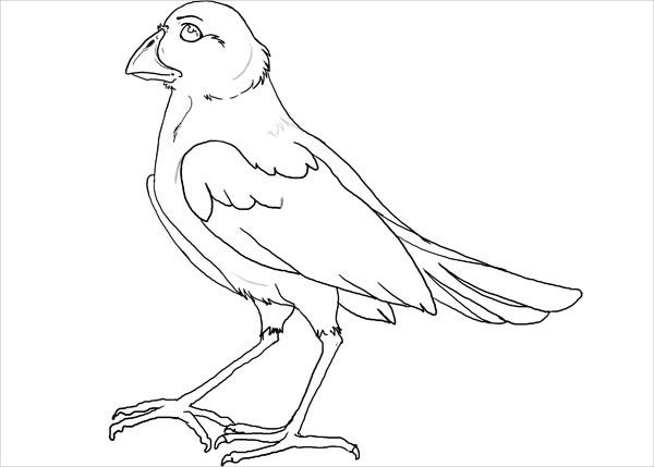 Printable Lineart Bird Template
