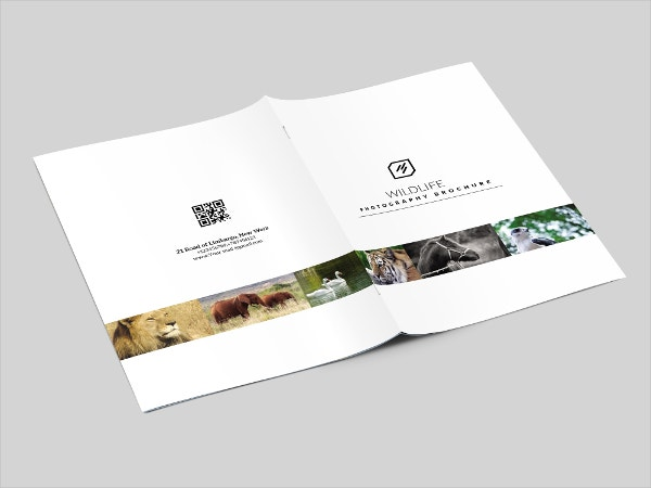 Wildlife Photography Brochure