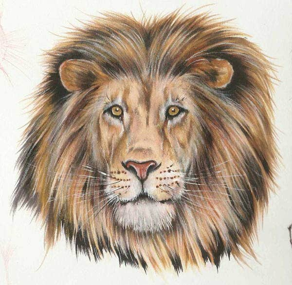 Lion face Art