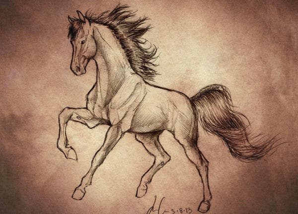Traditional Horse sketch