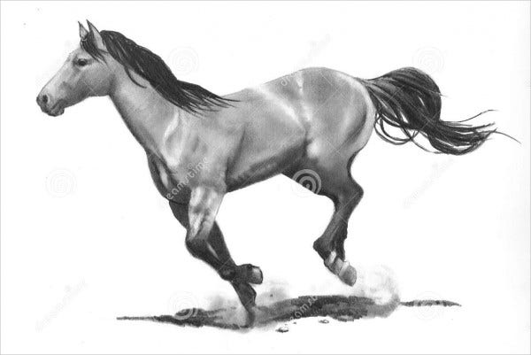 Pencil Sketches Drawing of Horse