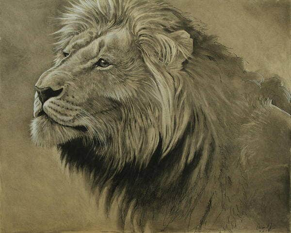 Lion Portrait Art