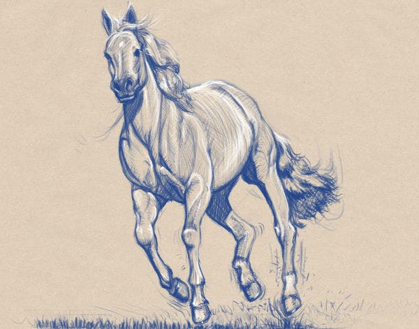 Awesome Sketch of Horse