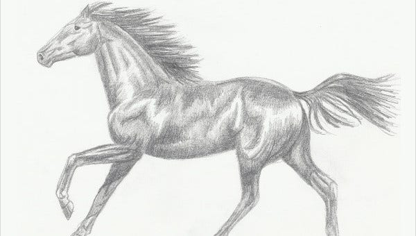 horsesketches